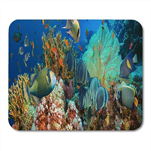 Luancrop Mauspads Blaue tierische Tropische Anthias-Fischnetz-Feuer-Korallen Mausunterlage für Notizbücher, Tischrechnermatten Bürozubehöre -