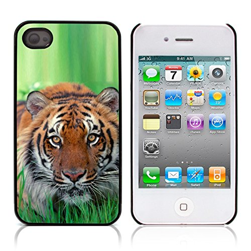 Graphic4You Baby Tiger Tier Design Harte Hülle Case Tasche Schutzhülle für Apple iPhone 4 und 4S Design #3