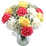 Clare Florist Cool Carnations Fresh Flower Bouquet - Dozed Mixed Carnations for All Occasions