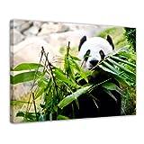Bilderdepot24 Kunstdruck - Pandabär - Bild auf Leinwand - 80 x 60 cm - Leinwandbilder - Bilder als Leinwanddruck - Wandbild Tierwelten - Wildtiere - bedrohte Tiere - China
