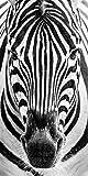 Startonight Glasbild Zebra, Bild auf Acrylglas Muster Modern Dekoration Fertig zum Aufhängen 40 x 120 cm