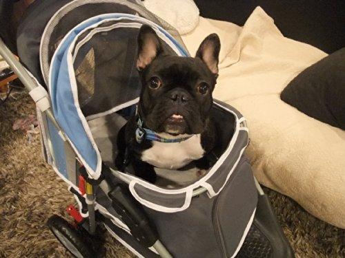 """InnoPet """"First Class"""" Hundebuggy Jogger Buggy Hundetasche Hundewagen Pet Stroller blau grau - 5"""