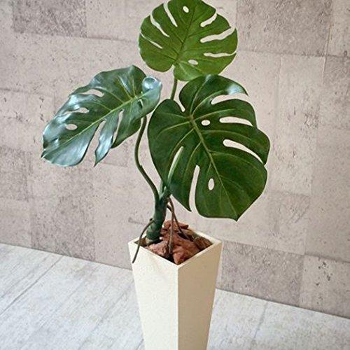 Monstera Topfpflanzen - 10 Samen Indoor Zierpflanzen, Grüner Blätter Immergrün
