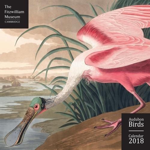 Fitzwiliam Musuem Audubon Birds 2018