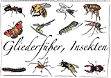 Gliederfüßer und Insekten (Wandkalender 2017 DIN A2 quer): Tierzeichnungen (Monatskalender, 14 Seiten ) (CALVENDO Tiere)
