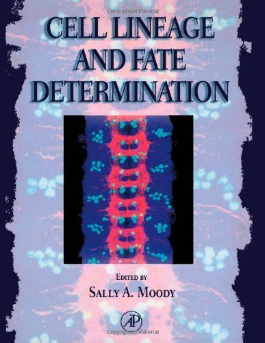 Cell Lineage and Fate Determination (1998-11-06) par unknown
