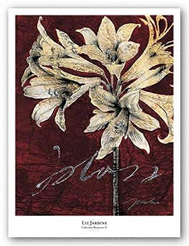 Cabernet Blossoms II by Liz Jardine Art Print Poster