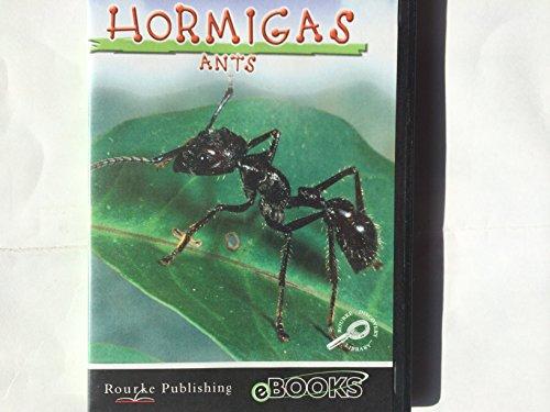 Hormigas / Ants