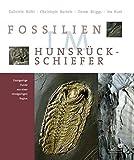 Fossilien im Hunsrück-Schiefer: Einzigartige Funde aus einer einzigartigen Region
