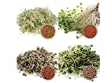 1 kg BIO Keimsprossen Mischung -4 Sorten Mix- Keimsaat 4 x 250 g Samen für die Sprossenanzucht Alfalfa, Kresse, Radies, Salatrauke Sprossen Microgreen Mikrogrün