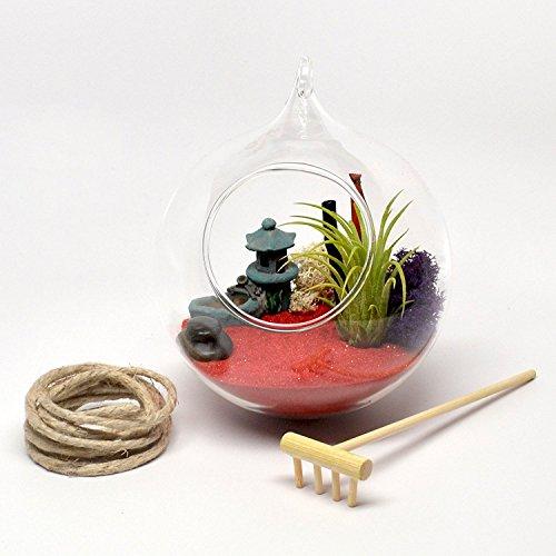 Pixie Schein zum Aufhängen Glas Terrarium Zen Garten Szene mit Live Air Pflanze, Miniaturflasche Tempel, Holz Rechen, Bambus und mehr