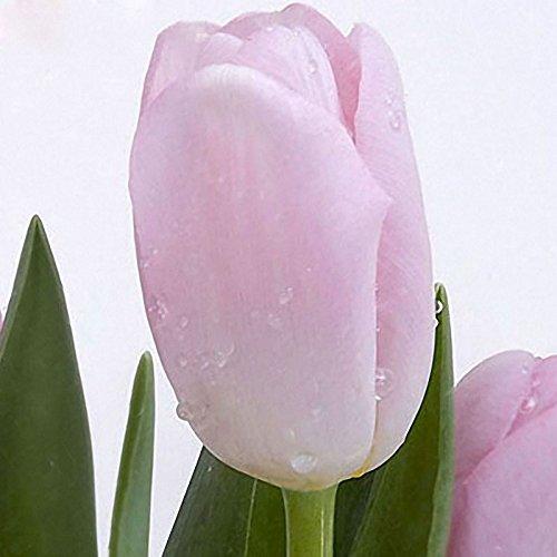 Inovey 10Pcs Parfum Tulip Seed Vivaces De Haute Qualité De Fleurs Bonsaï Graines Maison De Jardin De Plantation - 2