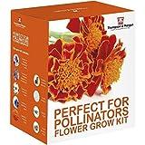 Perfetto per Pollinators SEME Kit per far crescere SCATOLA REGALO DA Thompson & MORGAN – 5 APE COMPATIBILI Floreali Fiori to Grow ; Verbena bonariensis, pauloni, calendula, Grano & Margherita SEMI