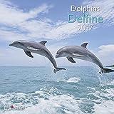 Delfine 2017 - Tierkalender 2017, Meerekalender 2017, Aqua Kalender 2017, Delfinkalender, Naturkalender  -  30 x 30 cm