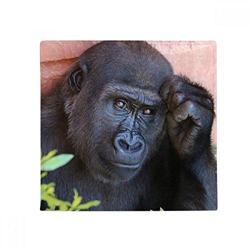 DIYthinker Terrestrial Organismus Wildtier Schimpanse Anti-Rutsch-Boden Haustier-Matten-Platz Badezimmer Wohnzimmer Küche Tür 60 / 50cm Geschenk 60X60Cm Mehrfarbig -
