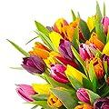 Clare Florist Mixed Tulips Fresh Flower Bouquet