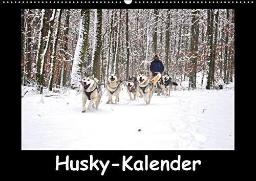 Husky-Kalender (Wandkalender 2018 DIN A2 quer): Sibirische Huskies (Monatskalender, 14 Seiten ) (CALVENDO Tiere) [Kalender] [Apr 01, 2017] andiwolves, k.A.