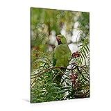 Calvendo Premium Textil-Leinwand 80 cm x 120 cm hoch, Im peruanischen Pfefferbaum | Wandbild, Bild auf Keilrahmen, Fertigbild auf Echter Leinwand, Leinwanddruck Tiere Tiere