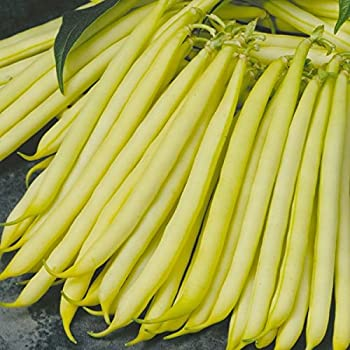 Safari 125 Seeds Dwarf French Bean Vegetable