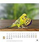 Freche Wellensittiche Postkartenkalender – Kalender 2017 - 6
