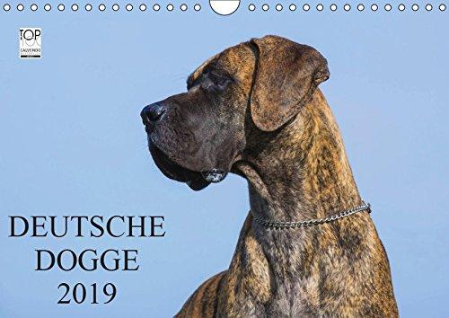 Deutsche Dogge 2019 (Wandkalender 2019 DIN A4 quer): Der Apoll unter den Hunden auf 13 wunderschönen Fotos in Porträt und Action (Monatskalender, 14 Seiten ) (CALVENDO Tiere)