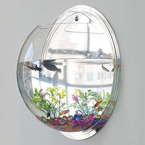 Exoticbuy Aquarium mit Wandhalterung Blumentopf Wand-Dekor, kugelförmig