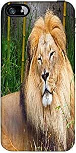 Snoogg African Lion Male Designer Case Cover For Apple Iphone 5C / 5C