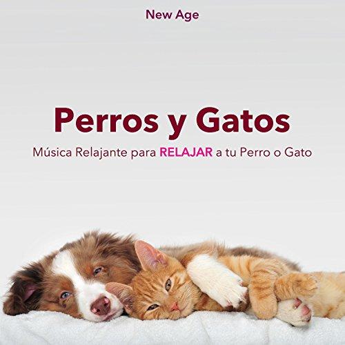 Perros y Gatos: Música Relajante para Relajar a tu Perro o Gato,...