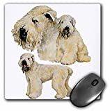 3dRose mp_870_1 8 x 8-Inch Soft Coated Wheaten Terrier Mouse Pad