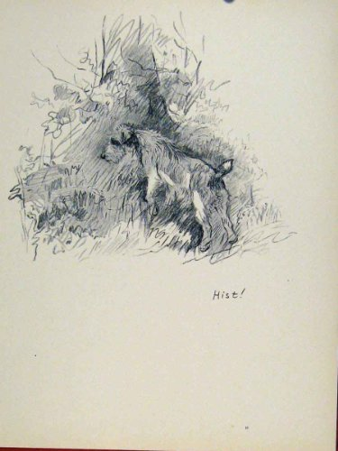 Sektch Drawing Print Old Art C1938 Dog Hound Forrest