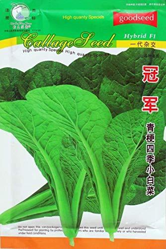 vista 100 grammi/confezione originalecampione cavolo verde cavolo, semi di verdure a crescita rapida semi di bonsai giardino di casa spedizione gratuita