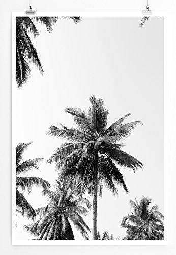 Eau Zone Home Bild - Naturbilder – Kokospalmen mit Himmel- Poster Fotodruck in höchster Qualität