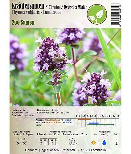 Kräutersamen - Thymian/Deutscher Winter - Thymus vulgaris 200 Samen