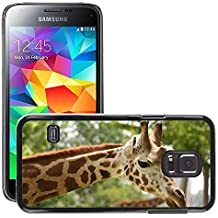Print Motif Coque de protection Case Cover // M00154543 Cabeza de la jirafa Zoo Neck Wildlife // Samsung Galaxy S5 MINI SM-G800