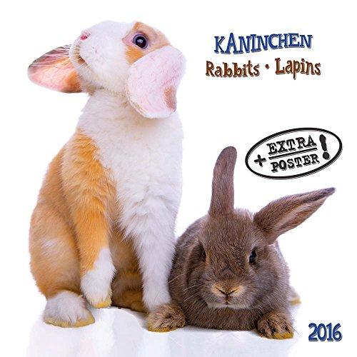 Rabbits/Kaninchen 2020: Kalender 2020 (Artwork Edition) (Tv Kaninchen)
