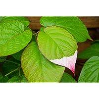 Suchergebnis auf Amazon.de für: schmuckblatt - Blumen