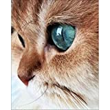 DIY 5D Diamond Painting by Number Kits, Full Drill Crystal Rhinestone Embroidery Pictures Arts Craft for Home Wall Decor Gift,Green-eyed Cat Head