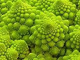 Blumenkohl - Romanesco Ottobrino - ca. 250 Samen