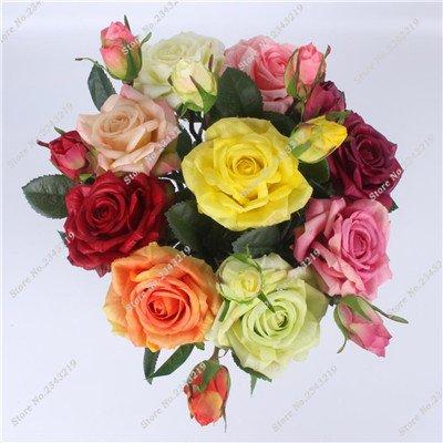 Exotique Miniature Bonsai Fleur Rose Rosas Graine Bricolage Jardin Maison Ménage et embellissant de purification d'air 110 Pcs/Sac 1