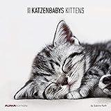 Katzenbabys 2020 - Kittens - Wandkalender - Broschürenkalender (30 x 60 geöffnet) - Tierkalender - Wandplaner: by Sabine Rath