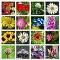 10g MEADOW WILD FLOWER BUTTERFLY & BEE MIX 16,000 SEEDS poppy cornflower oxeye daisy