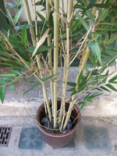 Künstlicher Oriental Bambus, 3522 Blätter, mit Naturbambus 1,85m Topqualität -