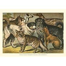 Henry J. Johnson – Perro de Johnson razas I Artistica di Stampa (33,02 x 24,13 cm)