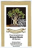 Bonsai - Ficus benghalensis - Banyan-Baum (20 Samen)