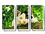 Katze mit 2 Augenfarben - Dreiteiler (120x80 cm) - Bilder & Kunstdrucke fertig auf Leinwand aufgespannt und in erstklassiger Druckqualität