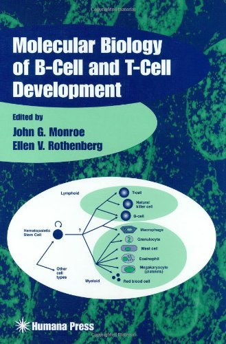 molecular-biology-of-b-cell-and-t-cell-development