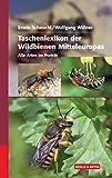 Taschenlexikon der Wildbienen Mitteleuropas: Alle Arten im Porträt - Erwin Scheuchl, Wolfgang Willner