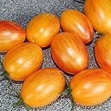 10 Samen Artisan Blush Tiger Tomate – guter Ertrag, außergewöhnliche Sorte
