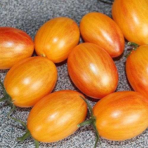 10 Samen Artisan Blush Tiger Tomate - guter Ertrag, außergewöhnliche Sorte