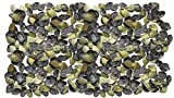 Seashell Crafts Supplies–circa 600pezzi conchiglie–Violet Mactra/Mactra violacea (viola, spessore) per box, cornici di conchiglia conchiglia, conchiglia specchio